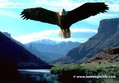 an eagle flying over a gorge